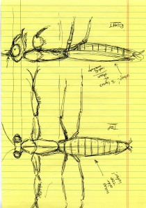 Ororbia_Ortho_Sketches